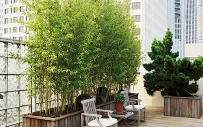 Bambusowy balkon