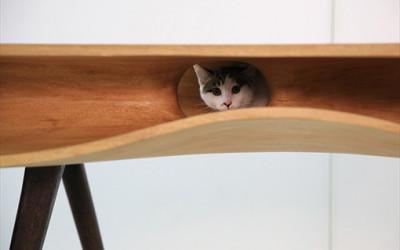 Kocie biurko