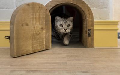 Mieszkanie stworzone z myślą o kotach