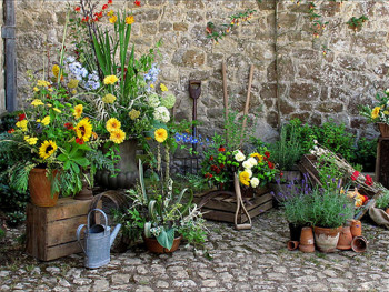 Mój piękny ogród