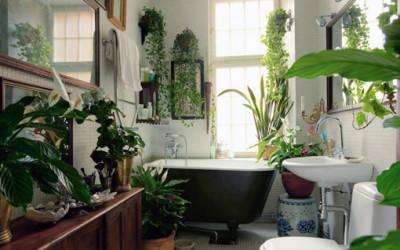 Najlepsze rośliny do łazienki