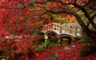 Piękno japońskich ogrodów