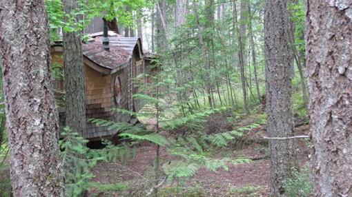 Przyczepa w lesie