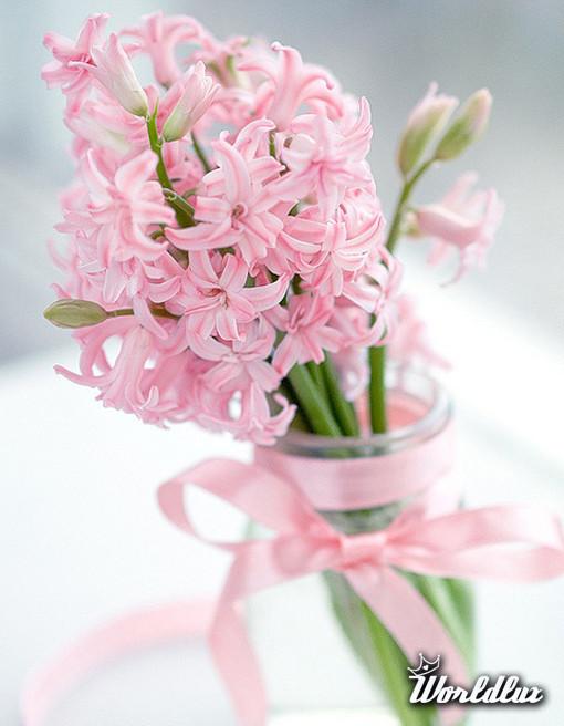 Wiosenne Kwiaty Doniczkowe Jak Wprowadzić Odrobinę Wiosennego
