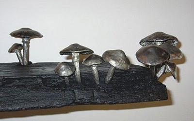 Fungi Kathariny Mischer 1