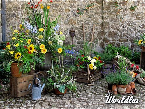 Mój piękny ogród - Czy jesteś zapalonym ogrodnikiem? Kochasz kwiaty ogrodowe? Prace w Twoim ...